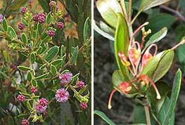 Irvinebank rare plants